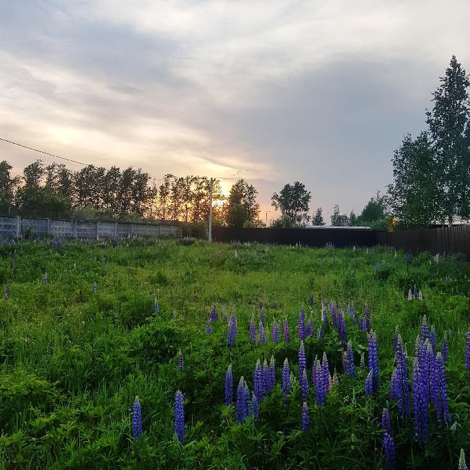 Участок: садовое товарищество (фото 5)
